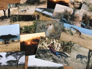 Foto's van dieren in Afrika